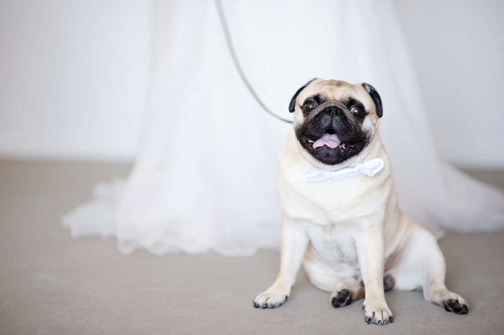 How To Include Your Dog In Your Wedding Photos